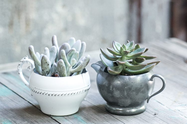 DIY Wedding Succulents