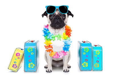 Boarding Your Dogs While Honeymooning