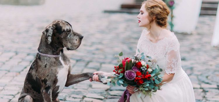 How to Incorporate Dogs in Your Wedding