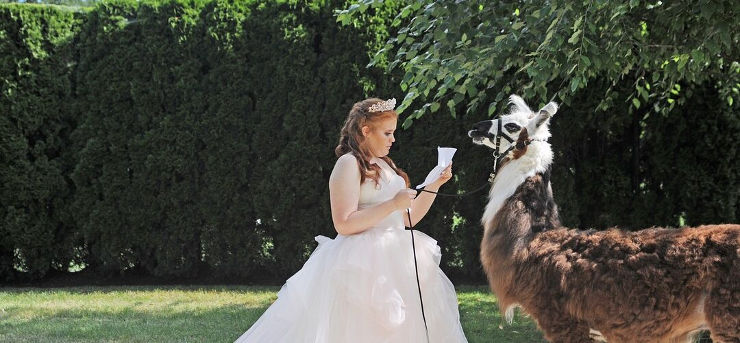 When You Bring A Llama To Your Wedding